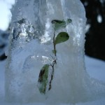 Protecting Your Plants in Freezing Temps