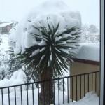 Yucca Plants in Freezing Temperatures